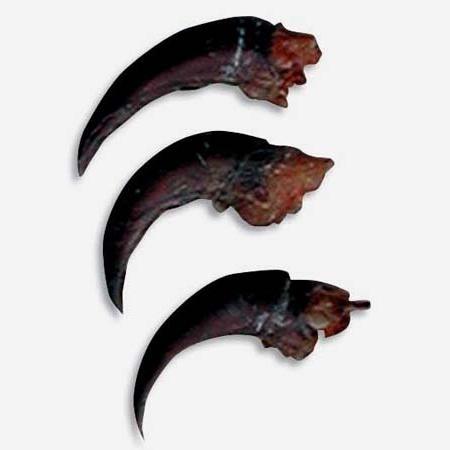 Stachelschweinkralle