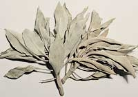 White Sage 1 kg