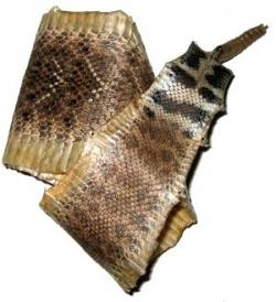 Diamondback-Klapperschlangehäute. Preis auf Anfrage.