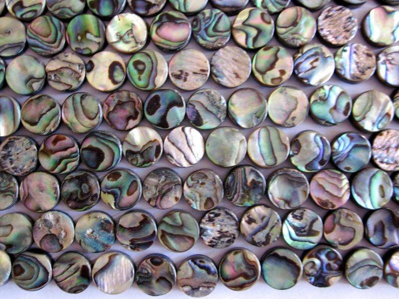 Abalonemuschelscheiben