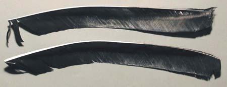 Pfeilfedern Truthahn schwarz